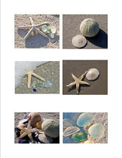 Greeting Cards Shells & Sea Glass Fine Art Photography 6 Cards Free U.S. Ship