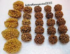 Natural Pure 2,3,4,5,6 Mukhi (Face) Rudraksh Rudraksha A+ (Big lot of 25 pieces)