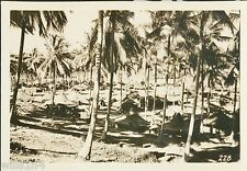Photo of 40th Division Encampment in New Britain New Guinea WWII