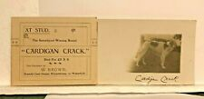 1914 Prize winning Borzoi Dog Cardigan Crack With Stud Lineage Card posted