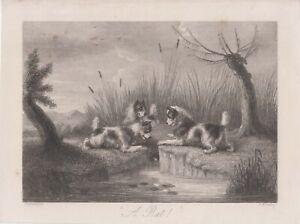 """A Rat!"" Antique Victorian Dog Print Bookplate Illustration 1852 G Armfield"
