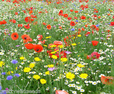 WILD FLOWER SEEDS MEADOW MIX GRASS PREMIUM mix 100g Mix 24