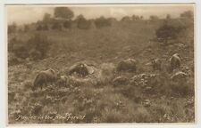 Hampshire postcard - Ponies in the New Forest