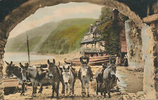 PC61579 Clovelly. We are Seven. Donkeys. Frith. No 61016