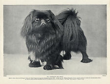 PEKINGESE NAMED CHAMPION BLACK DOG OLD ORIGINAL 1934 DOG PRINT