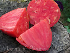 10 graines de tomate rare précoce Batyanya heirloom  tomato seeds organic bio