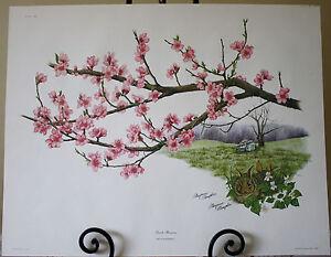 Maryrose Wampler 22x28 Peach Blossom LE Signed Print COA Plate 16 1976