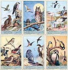 Chromo Liebig Sang. 1804 ITA Gli Uccelli Protetti ANNO 1964
