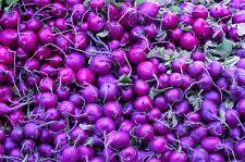 300 PURPLE PLUM RADISH Raphanus Sativus White Flesh Root Vegetable Seeds *CombSH