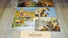FELINS  ! w disney  jeu photos cinema lobby cards , lion , panthere , jaguar