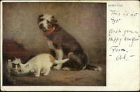 Terrier Dog Cats Drink From Saucer UNSELFISH c1910 Postcard