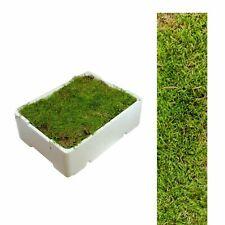 1 Kiste Plattenmoos ca 2,00 - 2,50 kg  Polstermoos  ,naturmoos, Krippenmoos Grün