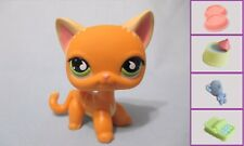 Littlest Pet Shop Cat Shorthair Siamese 525 Free Accessory Authentic US Seller