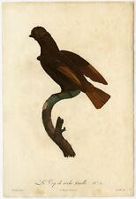 Rare Antique Print-BIRD-COCK-OF-THE-ROCK-Levaillant-Barraband-1801