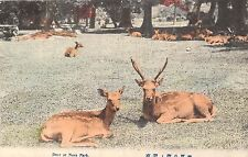 POSTCARD    JAPAN  NARRA  PARK   Deer