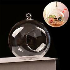 GUT Fashion Hanging Glass Ball Vase Planter Pot Terrarium Container Garden Decor