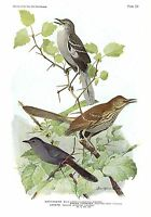 "1936 Vintage FUERTES BIRDS #101 ""MOCKINGBIRD, CATBIRD"" Color Plate Lithograph"