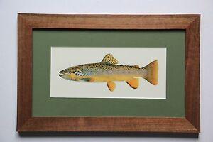 Brown Trout Print by Joe Tomelleri