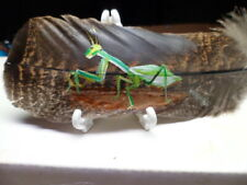 Praying Mantis-Hand painted rare turkey feather, by artist W. W. Hoffert