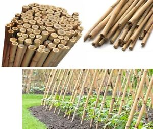 2Ft-4FT Heavy Duty Canes Bamboo Garden Plant Support Thick Stakes Support Sticks