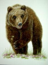 Original Watercolor Grizzly Bear Carnivore Wildlife Art Sally Porter