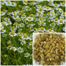 Chamomile flowers, soap making supplies, also for herbal extracts, teas, salves.