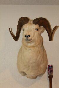 Dall Sheep Head Shoulder Mount Repro Horn Taxidermy Bighorn Ram Log Cabin Decor
