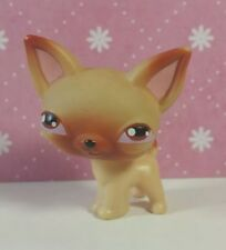 Littlest Pet Shop Hund #1 Chihuahua dog LPS