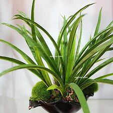 3 x 7 Leaf Latex Artificial Orchid Plant Tree Christmas Day No Pot Green