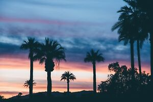 PALM TREES TROPICAL SUNSET CANVAS PICTURE POSTER PRINT WALL ART UNFRAMED 822