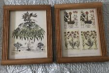 Rustic Chunky Thick Heavy Wooden Wall Framed Print Frames x 2 Hellebore Plant