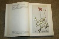 Fachbuch Heilkräuter, Arzneipflanzen, Buckelapotheker, Kräuterwissen, Olitäten