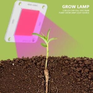 50W COB LED Chip Full Spectrum Floodlights Plant Grow Lamp Light Source DC12V