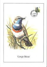 FDC 2321 - Oiseau Buzin sur gravure format A4 !