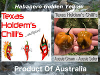 5 x Rare Golden Yellow Habanero Chilli Seeds.  Sweet, smokey amazing chili