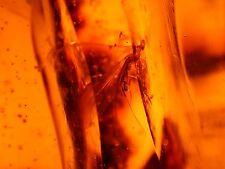 Beautiful Winged Termite, Moth, Flies in LARGE 45.7 g Dominican Amber Gemstone