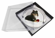 Tri-Col Sheltie with Red Rose Glass Paperweight in Gift Box Christmas, AD-SE1RPW