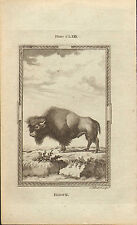 "1785 copper engraving  -  buffons natural history. ""  bison  """