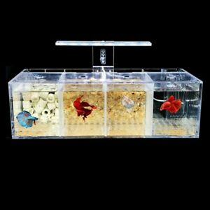 Acrylic Betta Cylinder Isolated Fish Tank Breeding 4 Grids Tank With LED Panel