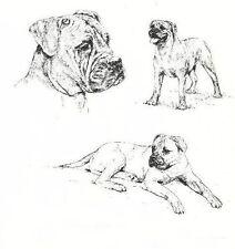 Bullmastiff - 1963 Vintage Dog Print - Matted *