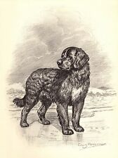 1950s Antique Newfoundland Dog Print Vintage Edwin Megargee Dog Art 2717