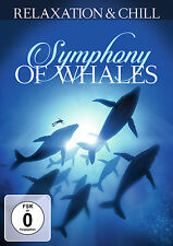 DVD Symphoiny Of Whales - Slow Ambient And Lounge TV