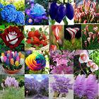 28# Lot Rare Seeds Fruit Flower Grass Tree Garden Yard Home Bonsai Decor Plants