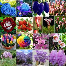 29# 100XLot Rare Seeds Fruit Flower Grass Tree Yard Home Bonsai Decor Plants HOT