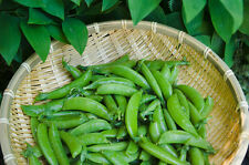 Pea - Sugarsnap (pisum sativum) 15 Reliable Viable Seeds