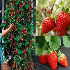 Red 200pcs Climbing Strawberry Seeds Fruit Vegetables Plants Seed Home Garden