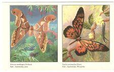 Estampado mariposa schiebebild Saturniidae y papilionidea-RDA 1988
