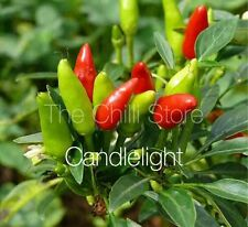 HOT CHILLI PEPPER - CANDLELIGHT- 10 SEEDS