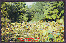 LMH Postcard  SAM HOUSTON PARK  Water Lillies  LILY POND  Huntsville TX 1960's