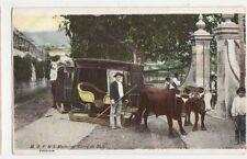 Madeira Carro de Bois Vintage Postcard 497a